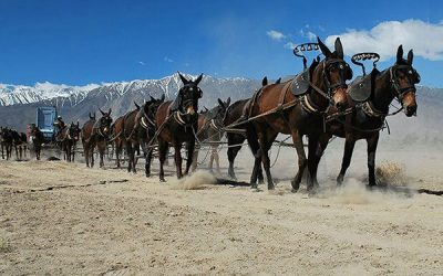 Twenty-Mule-Team-of-Death-Valley